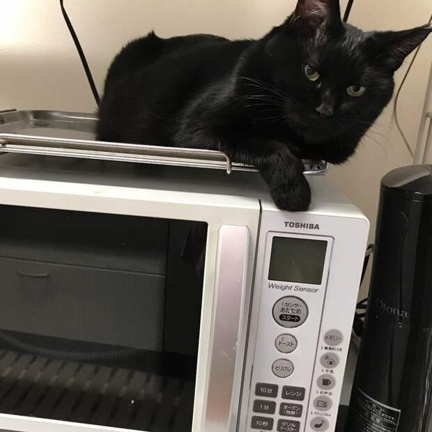 Я что-то не понял, когда моя еда будет разогрета кот, коты, опасный кот, прикол, суровый