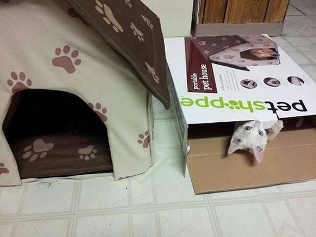 Осваивается в новом доме. интересное, кошки, фотографии