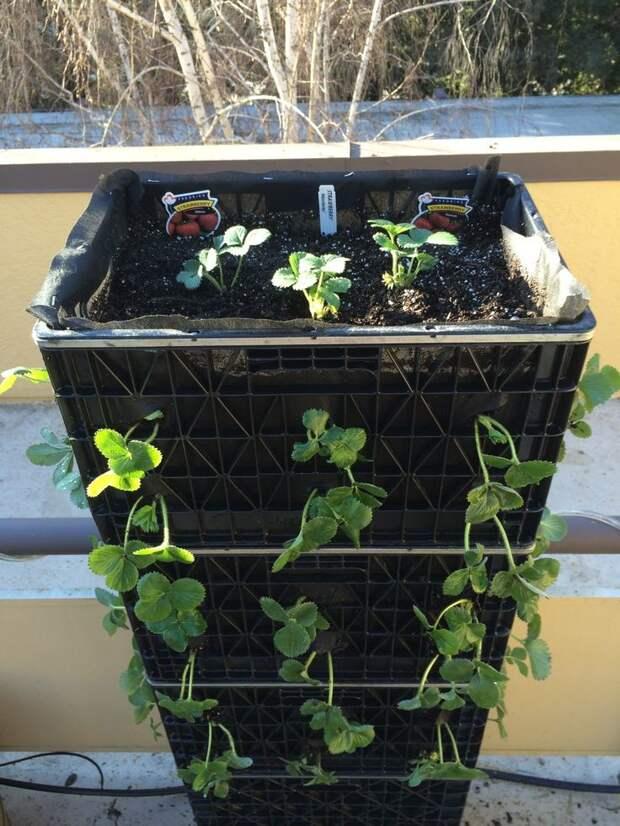 Садоводы тоже оценят место для рассады интересно, контейнер, поделки, полезный пост, своими руками, фото