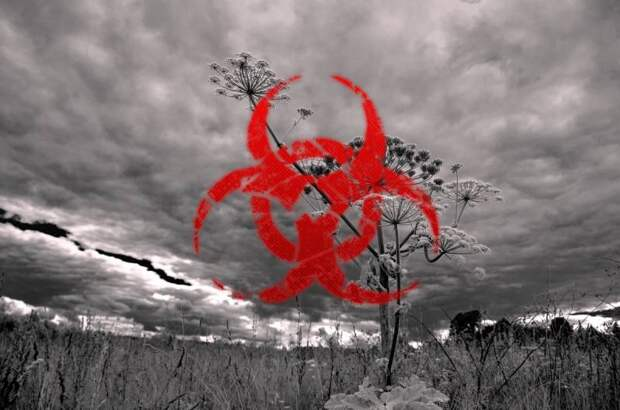 От биологической угрозы к продовольственной безопасности