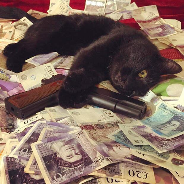 Карты, деньги, два ствола: 20 фото гангстакотиков изинстаграма