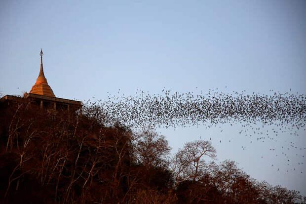 Ратчабури, Таиланд. Летучие мыши вылетает из пещеры храма