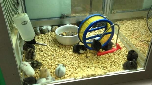 Видный единоросс требует запретить продажу животных в зоомагазинах и на птичьих рынках