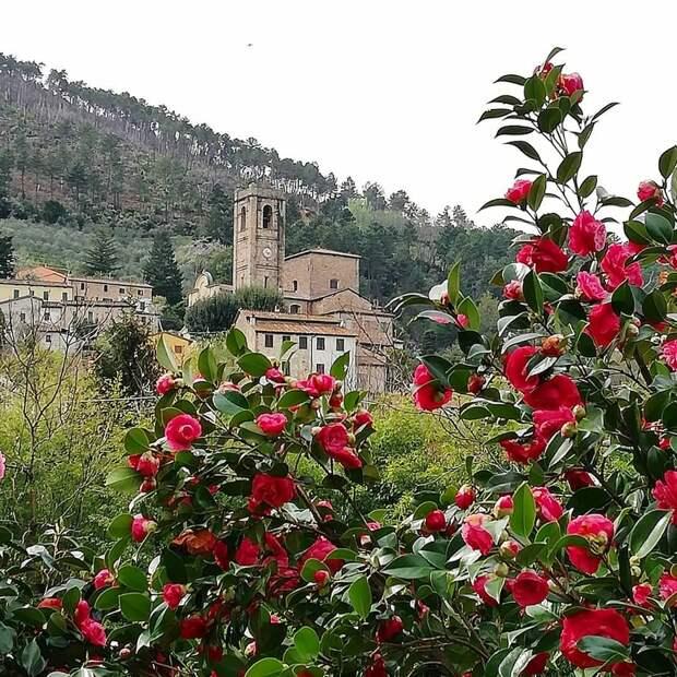 Тосканские «борго камелий»: удивительная прогулка по нетуристической Лукке