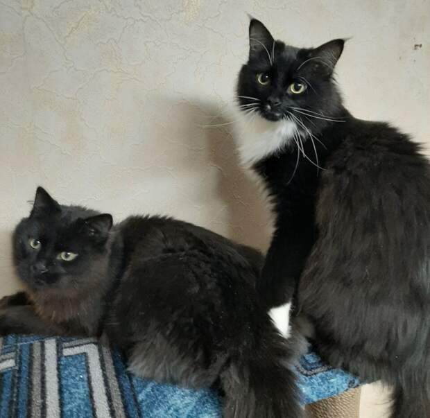 Хозяин за дверь на целый день, а тем временем кот: 7 вариаций