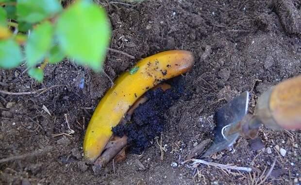 как использовать банановую кожуру, банановая кожура не по назначению