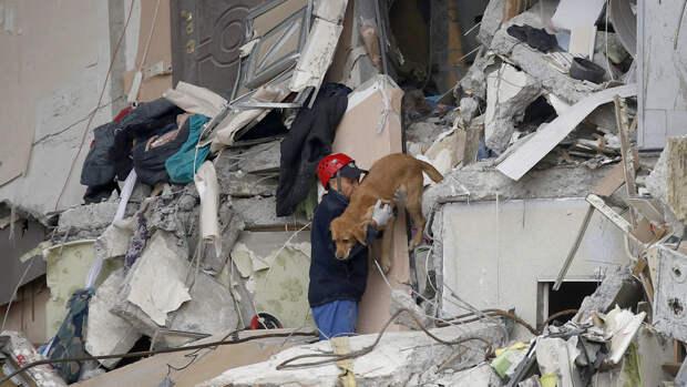 Волонтеры сообщили о спасении всех кошек и собак в разрушенном доме в Ногинске