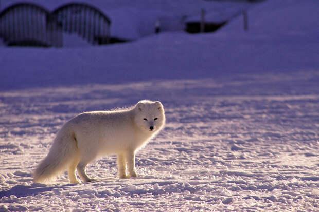 В Гидрометцентре оценили прогноз климатолога о «суровой зиме»