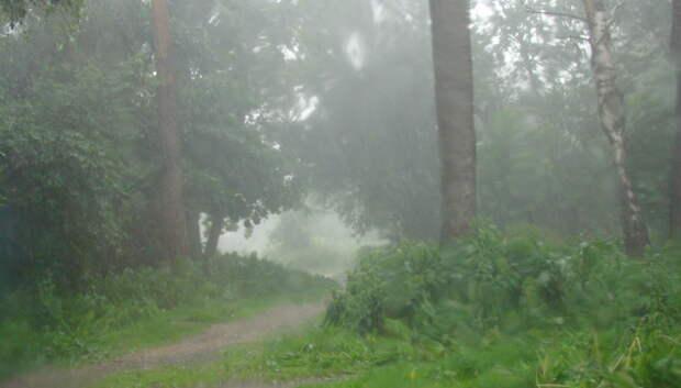 Жителей Подмосковья предупредили о ливне, граде и ветре 7 и 8 июля