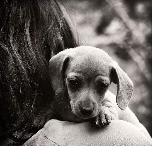 WarNet.ws: Милые щенки (110 фото)