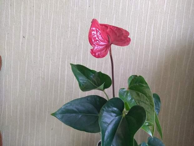 Дочка подарила мне цветок.