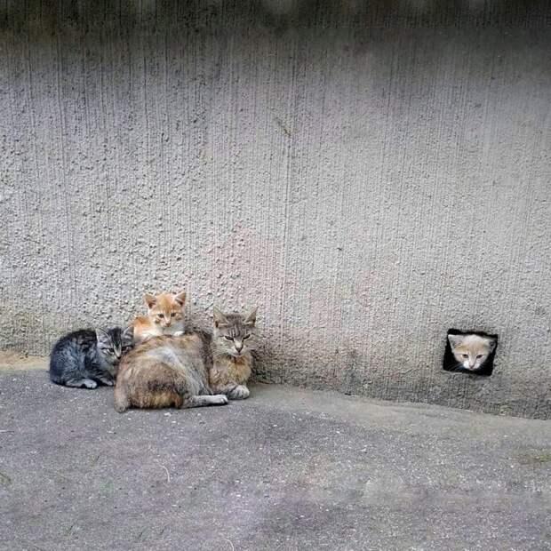 Очень колоритные уличные коты бездомные, город, кот, кошка, улица, уличные кошки, эстетика
