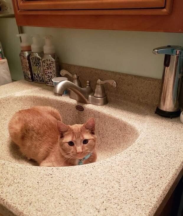 Котенок в раковине