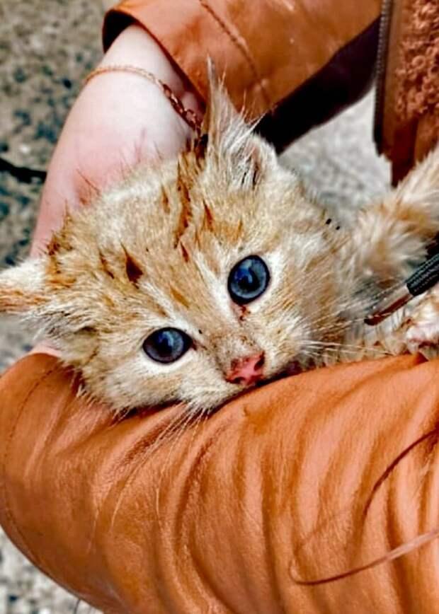 Кошка оставила котят холодной осенью. Спасти их удалось только благодаря школьникам