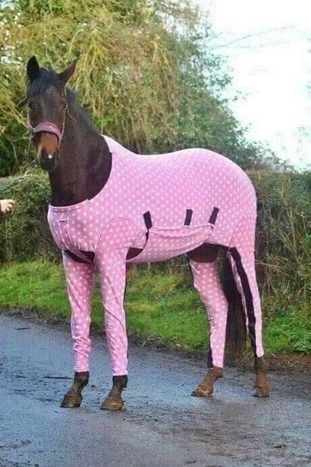 Конь в пальто. Теперь ты видел все!