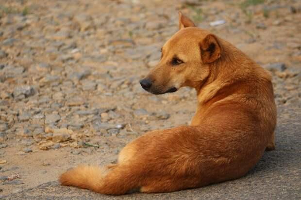 Родители не одобряли пса Патрона на площадке. Но когда туда прибежала стая бродячих собак, именно он кинулся защищать детей