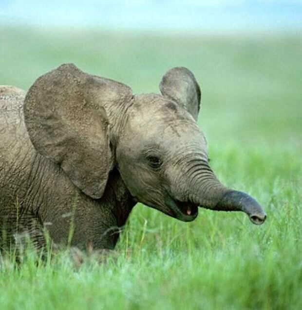 Слон ограбил грузовик с картошкой