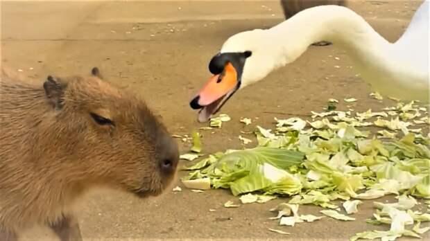 Очень смешные животные