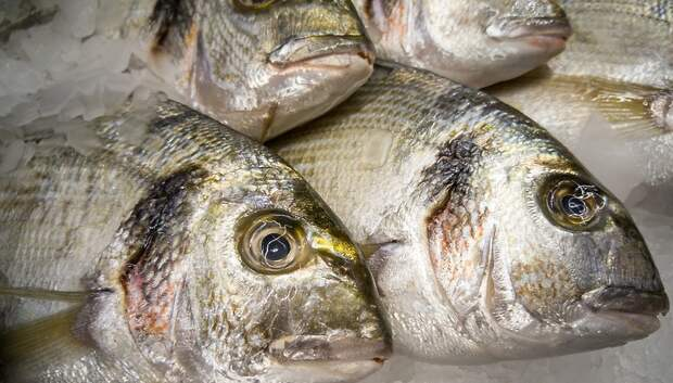 На заводе по производству рыбной продукции в Подольске создадут более 200 рабочих мест