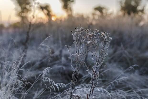 Крымчан ожидают заморозки