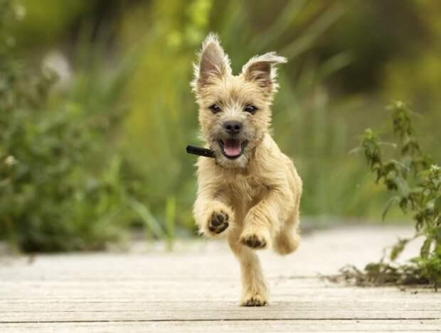2 июля международный день собак