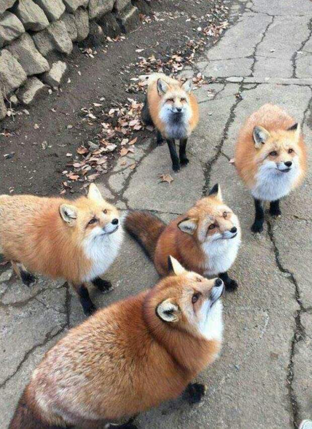 Эта лисичка явно только что вернулась от бабушки животные, коты, кошки, подборка, смешное, собаки, фото, юмор
