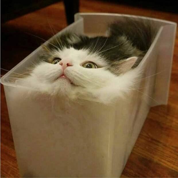 Очередное доказательство того, что коты — это жидкость. интересное, кошки, фотографии