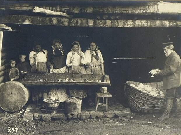 Рубка капусты. Неизвестный автор, 1900–1905 год, Оренбургская губ., Кунсткамера.