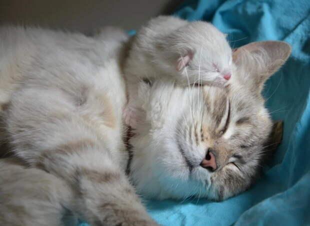 «Это для детей, я сама видела!»: родившая кошка упрямо несла малышей из коробки в коляску на балконе
