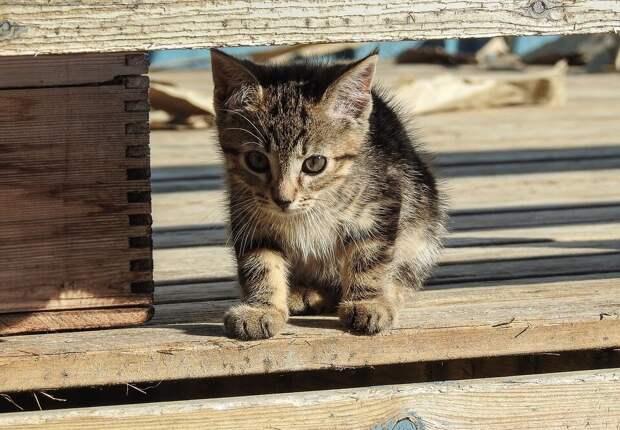 Счастье луковое: во время приезда на дачу пожилая пара обнаружила в грядке котёнка