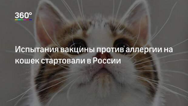 Испытания вакцины против аллергии на кошек стартовали в России