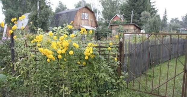Кому принадлежит ветка дерева, свисающая через соседский забор?
