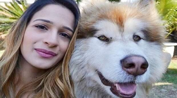 «Килограммы доброты, лохматая мордаха и море позитива»: огромный пёс с душой щенка просится на ручки
