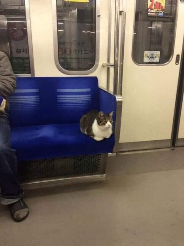 15 самых забавных моментов, которые могли произойти в жизни кота