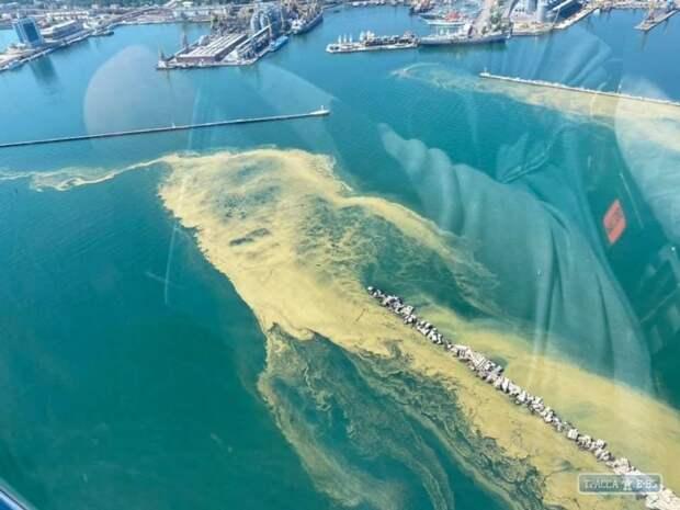 Цветение воды у берегов Одессы. Фото с дрона