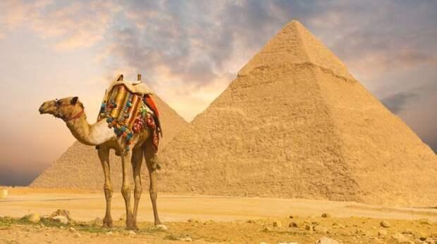8. Верблюды запасают воду в горбе МИФ И ПРАВДА, животные, животный мир, интересные факты, миф, познавательно, факты о животных