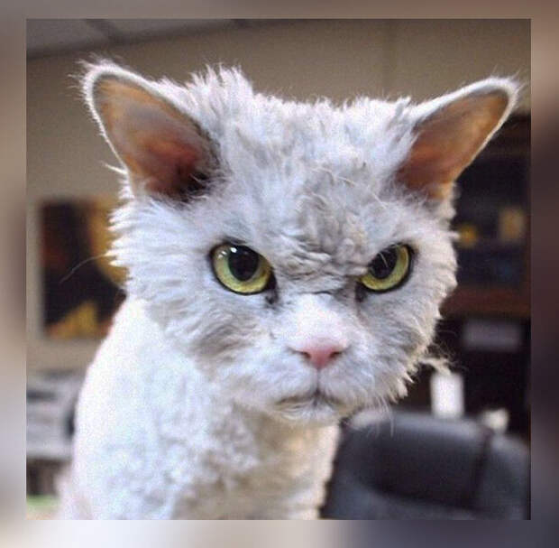 10 фото-доказательств того, что котов лучше кормить вовремя