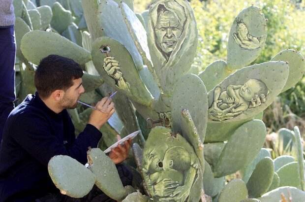 Палестинский художник пишет картины на кактусах кактус, художник