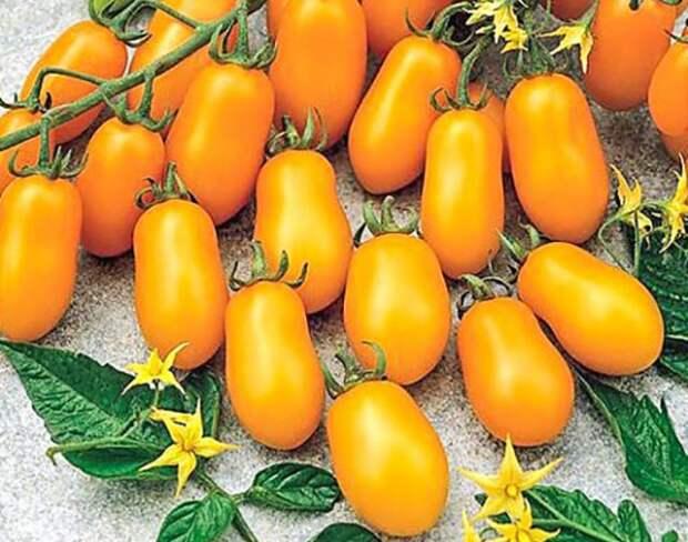 Лучшие гибриды томатов 2020