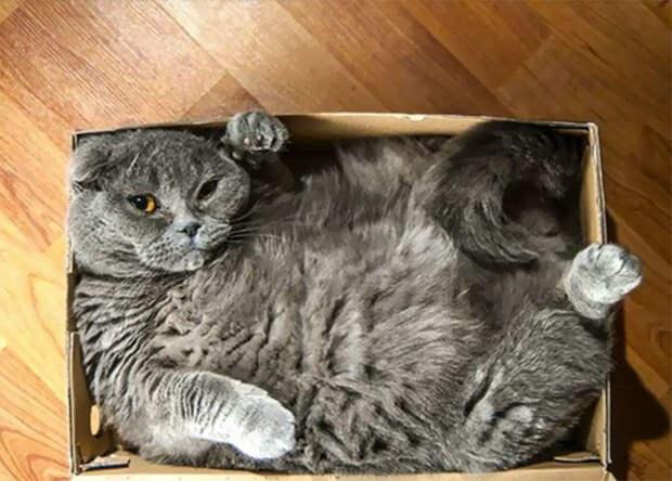 Для котов - размер не имеет никакого значения животные, забавно, котопост, коты, кошки, неожиданно, питомцы, юмор