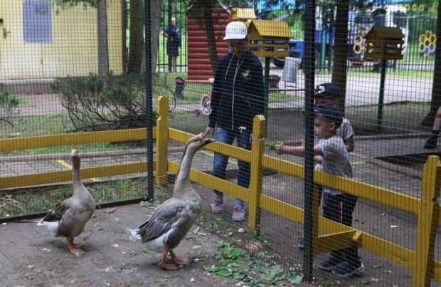 Обитатели мини-зоопарка соскучились по посетителям/Ярослав Чингаев, «Юго-Восточный курьер»