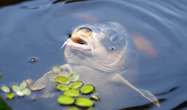 Настоящий квест: в«Водоканале» рассказали ростовчанам, как неплатить зарыбную воду