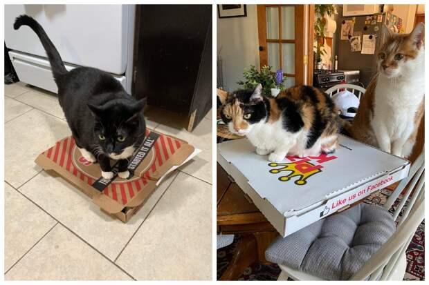 Коты и пицца — идеальное сочетание, и вот 18 доказательств