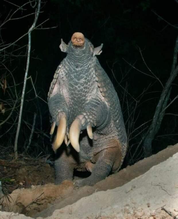 Подборка страшных когтей из животного мира