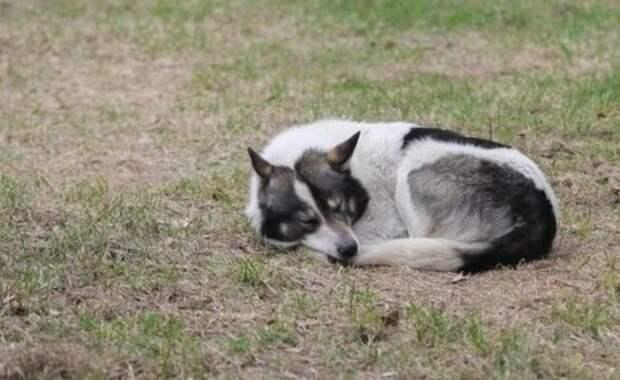 В двух районах Татарстана установили карантин по бешенству животных