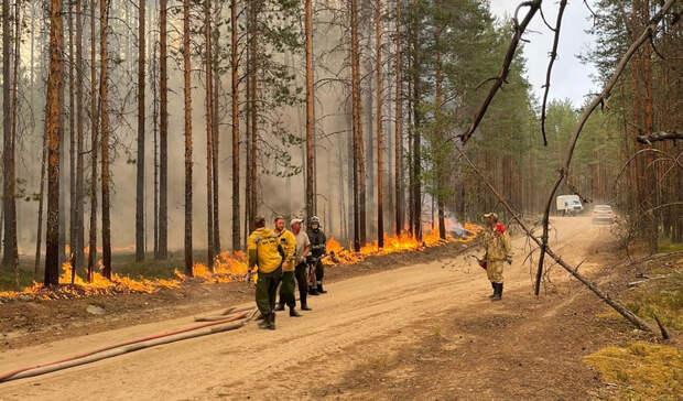 «Лесное хозяйство останется нищим»: Карелия подводит итоги пожароопасного сезона