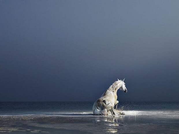 Грация прекрасных лошадей в фотопроекте Equus