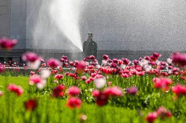 Москвичей предупредили о самом жарком дне с начала лета