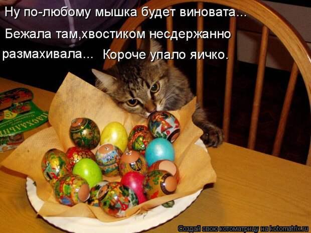 Котоматрица: Ну по-любому мышка будет виновата... Бежала там,хвостиком несдержанно  размахивала... Короче упало яичко.