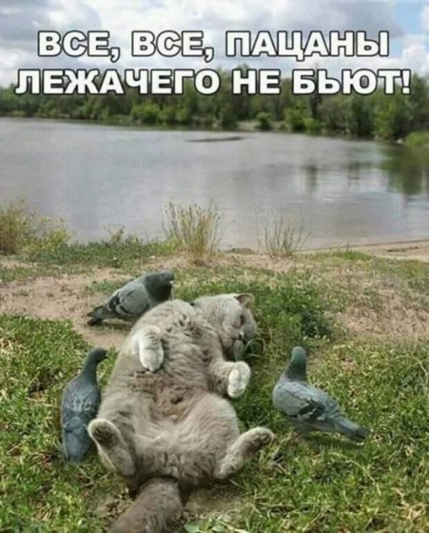 Зверский юмор животные, приколы, юмор